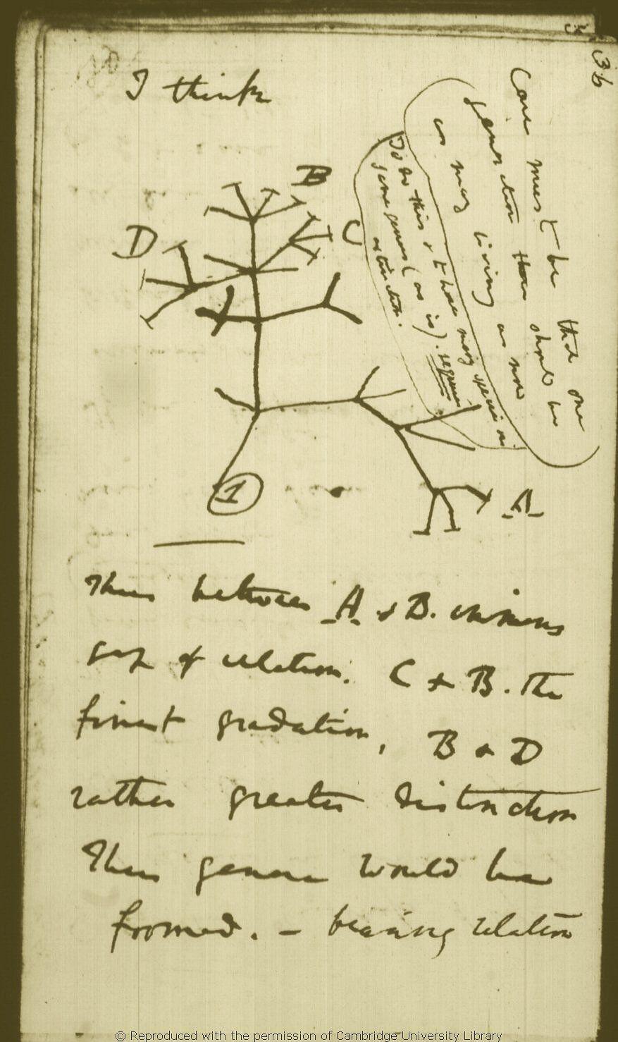 Anotações sobre Evolução por Seleção Natural: Como e Por quê? 5