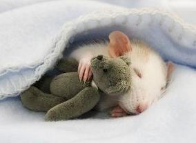 Afinal, analistas experimentais do comportamento gostam de animais? 5