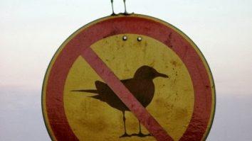 Pode-se falar em uma neutralidade dentro da clínica analítico-comportamental? 17