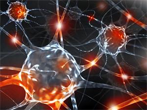 O reflexo dos neurônios 5