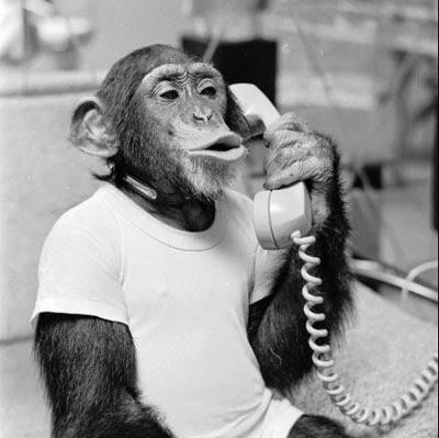Algumas reflexões sobre a inserção de animais em nossa comunidade verbal 5