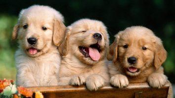 Estudo conduzido por Analista do Comportamento aponta que interagir com cães reduz estresse em humanos 13
