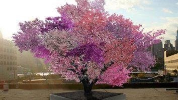 Frutos diferentes de uma mesma árvore: a ACT como proposta coerente com o Behaviorismo Radical 13
