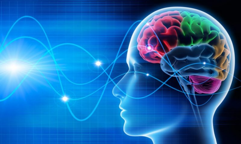 A neurobiologia do Transtorno de Personalidade Borderline: uma ponte para a análise comportamental